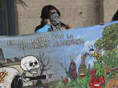 La exigencia principal es la anulación del permiso, puesto que los quejosos consideran que fue otorgado con fundamento en una norma inconstitucional (la fracción tres del artículo 61 de la Ley de Bioseguridad de Organismos Genéticamente Modificados (Lbogm) –popularmente conocida como ley Monsanto | Foto: INTERNET