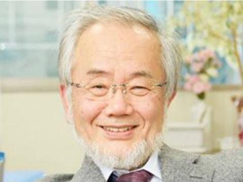 Los descubrimientos de Ohsumi condujeron a un nuevo paradigma en nuestra comprensión sobre cómo la célula recicla su contenido | Foto: REUTERS