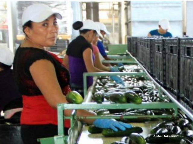 Cúpulas empresariales y sindicatos charros palomearán la lista de enfermedades profesionales | Araceli Damián