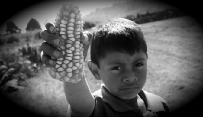 Hallan secuencias de maíz transgénico en 90 por ciento de las tortillas en México