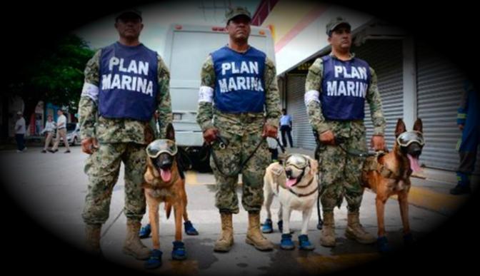 Además de Frida, te presentamos a los otros héroes caninos