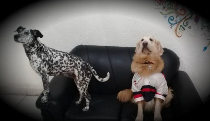 Terapeutas caninos, una opción para tratar la depresión y el desgaste emocional
