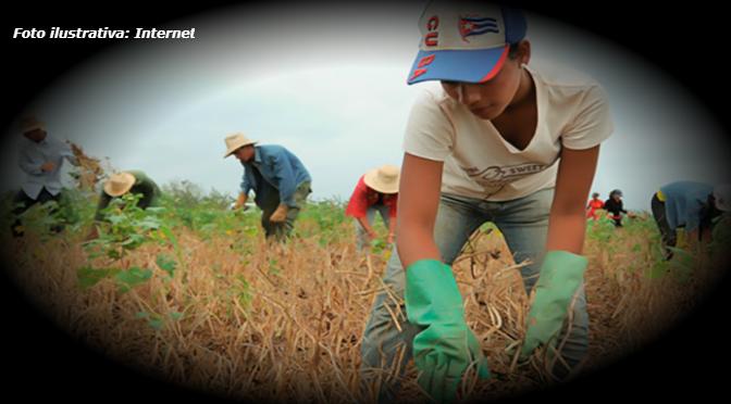 Producción agrícola, sin afectación por TLCAN, señalan