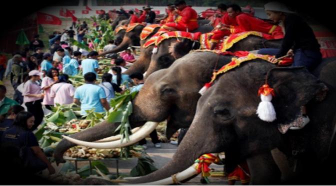 Tailandia celebró el Día Nacional del Elefante