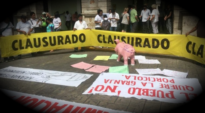 Cerdos Vs. Cenotes | Gloria Muñoz Ramírez